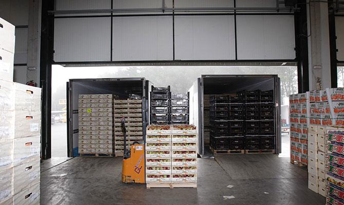 Frutas Lugo cajas